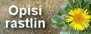Opisi rastlin