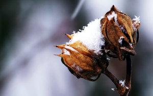 Cvet prekrit s snegom