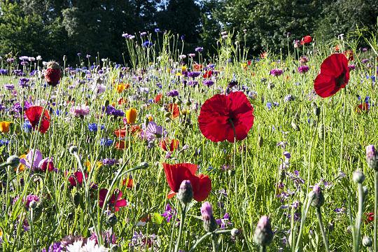 Cvetoč travnik