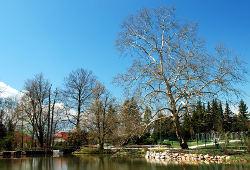 Krošnja drevesa brez listja