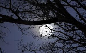 Noč z luno