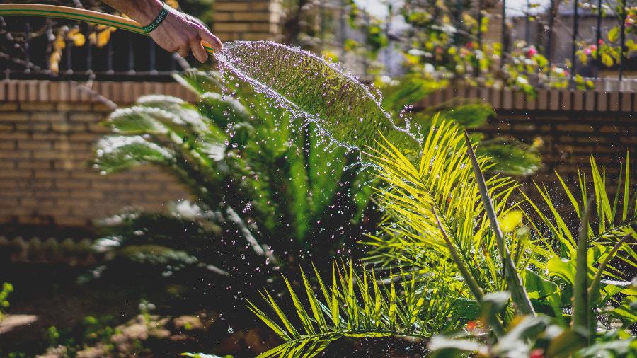 Zalivanje rastlin