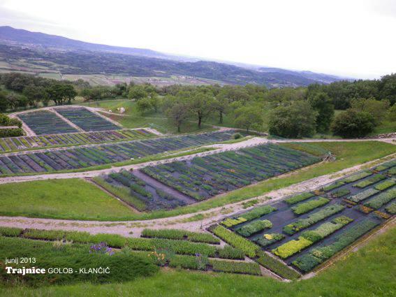 Pogled na vrtnarijo Trajnice Golob-Klančič