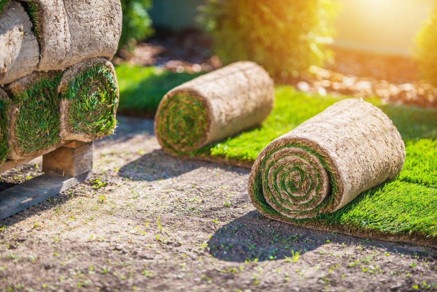 Zvitki travne ruše
