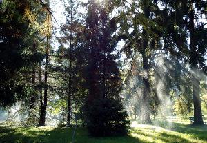 Stabla u parku