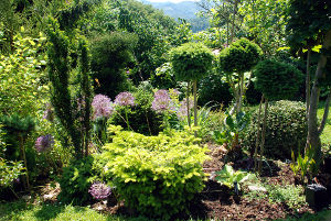 Kolekcijski vrt