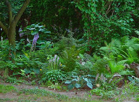 šumski vrt