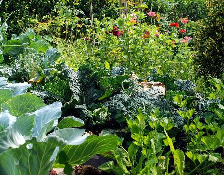 Organski vrt