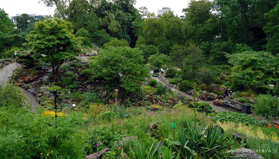 Botanični vrt v kopenhagnu - skalnjak