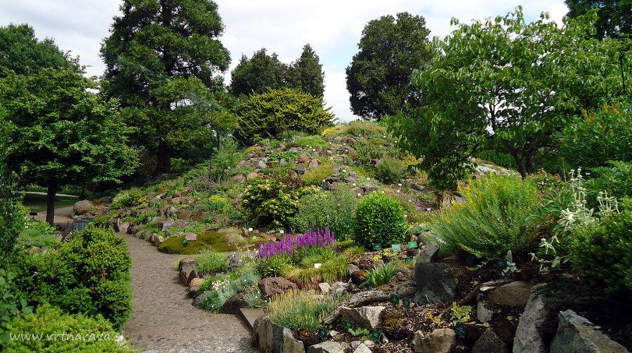 Skalnjak botanični vrt Kobenhavn