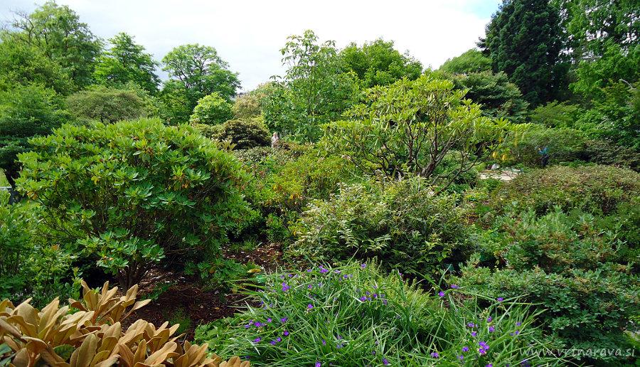 Botanični vrt Kopemhagen