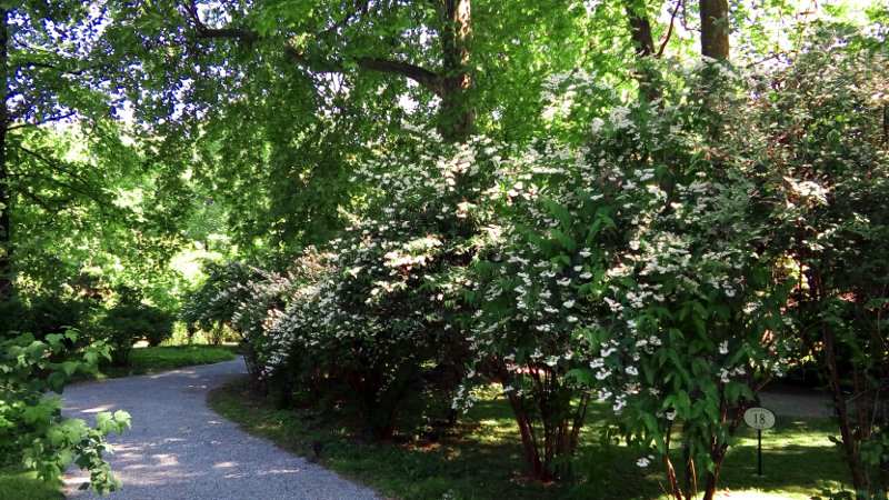 Botanični vrt v Zagrebu