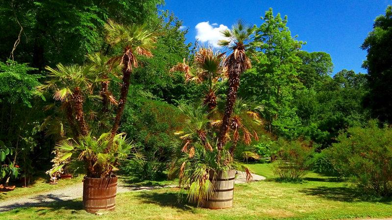 Palme v botaničnem vrtu Zagreb