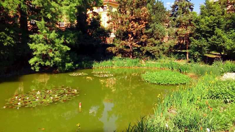 Ribnik v botaničnem vrtu