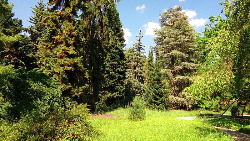 Botanični vrt zagreb - drevesa