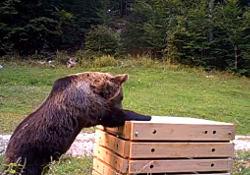 pred medvedom varen kompostnik