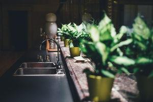 Rastline v kopalnici