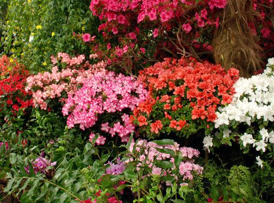 cvjeće